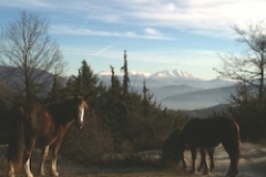 cavalli-alle-Pratarella